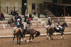 Remise en jeu (deniscoeur) Tags: cheval open lumire intrieur chevaux remise lumirenaturelle lumiredujour horseball f456 55250mm canon70d