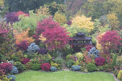 Pagoda garden in autumn  (view from house) (Four Seasons Garden) Tags: uk flowers blue autumn red england colour green english leaves yellow garden four japanese maple seasons award foliage national begonia deciduous winning walsall 2015 acers