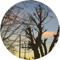 Para que dejar que todo muera (Milnueve89) Tags: sunset tree nature backlighting
