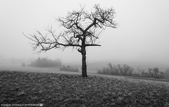 On a foggy Morning in early March. (andreasheinrich) Tags: morning blackandwhite cold tree misty fog germany landscape deutschland march nebel felder fields kalt landschaft morgen baum märz badenwürttemberg blackandwhitephotos neckarsulm neblig schwarzweis nikond7000