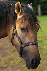 PICT0294 klein.jpg (henk.wallays) Tags: horse macro nature closeup caballo cheval wildlife natuur 1999 pony date cavalo mammalia hest aaaa hevonen paard vertebrate  poney equidae hynder equuscaballus chordata perd vertebrata zoogdier perissodactyla zoogdieren hobune hesten  hauspferd mammiferes oddtoedungulate calul kleinpferd equusferuscaballus gewervelden paardachtigen onevenhoevigen  henkwallays tamhst  kesyhevonen koduhobune tamhest