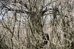 DSC_4804 (kabatskiy) Tags: city urban lake nature landscape spring dump minimal marsh abstracts