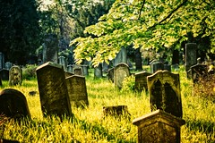 a thousand thousand sighs (TheOtherPerspective78) Tags: vienna wien old sunlight tree green abandoned cemetery graveyard grass canon headstone meadow headstones historic historical grabstein jewishcemetery zentralfriedhof inscription grabsteine jdischerfriedhof ef24105l theotherperspective78