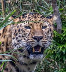 Parc de la tte d'Or - Lyon - France (fabiengirod1) Tags: animal zoo animaux flin