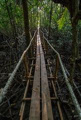 Mangrove Path, Khao Lak (hedshot) Tags: nature path platform tunnel rope explore mangrove endless