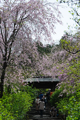 20160410-DSC_7537.jpg (d3_plus) Tags: sky plant flower history nature japan trekking walking temple nikon scenery shrine bokeh hiking kamakura fine daily bloom 日本 28105mmf3545d nikkor 花 寺院 自然 kanagawa 神社 寺 shintoshrine 空 散歩 buddhisttemple dailyphoto sanctuary 風景 植物 thesedays kitakamakura 鎌倉 28105 景色 歴史 fineday 神奈川県 ハイキング 28105mm 日常 holyplace historicmonuments 古都 zoomlense ancientcity 北鎌倉 ボケ トレッキング 晴れ ニコン ズーム 聖地 28105mmf3545 d700 281053545 nikond700 歴史的建造物 aiafzoomnikkor28105mmf3545d 28105mmf3545af aiafnikkor28105mmf3545d