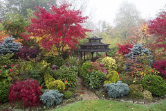Foo dogs amongst the colours of autumn (Four Seasons Garden) Tags: uk flowers blue autumn red england colour green english dogs leaves yellow stone garden four japanese maple seasons award foliage ornament national foo begonia deciduous winning walsall 2015 acers