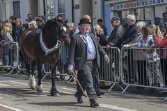 Cardigan, Ceredigion, Wales, UK. 30 April 2014 the sun shone for this years barley Saturday (andychittock) Tags: horse wales farmers parade cardigan stallion walesuk ceredigon barleysaturday