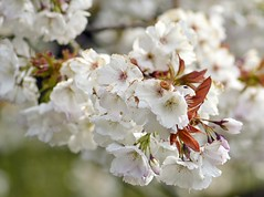 Spring 2016 - 804 LBG (Lostash) Tags: life flowers plants nature spring flora seasons