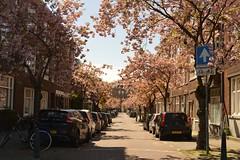Bieslandstraat - Rotterdam - Liskwartier (Raymond Swaep) Tags: nikon liskwartier