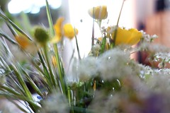 """ Hooray ..... "" (Petra U.) Tags: blur spring sooc sonydscrx100"