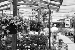 DSC_0402.jpg (dave_dubyuh) Tags: sf sanfrancisco california flowers blackandwhite macro nature spring nikon bees bayarea shops flowersplants smallbusiness