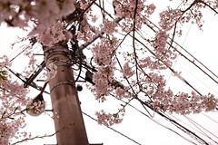 DSCF2264.jpg (nekoma15) Tags:  fujifilm astia    xt10