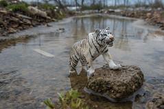(chrishowardphotography.com) Tags: tiger polarbear whitetiger blackpanther brownbear