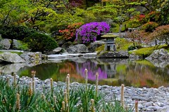 Azaleas in Bloom-Seattle Japanese Garden (Aurora Santiago Photography) Tags: seattle reflections pond azaleas stonelantern seattlejapanesegarden