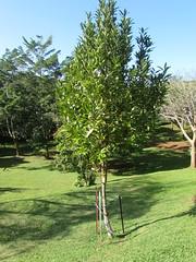 Princeville Botanical Gardens (popea53) Tags: hawaii kauai princeville