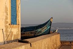 Dorra the Dory (David K. Edwards) Tags: ocean africa house home cat boat fishing seagull atlantic morocco wires essaouira dory mogador moroc