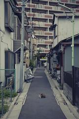 Tokyo 3941 (tokyoform) Tags: street city chris cidade urban cute japan cat japanese tokyo calle chat asia alone ciudad gato tquio   neko katze japo  japon kot ville citt katt tokio 6d adachi kucing adachiku jepang japn     strase jongkind tkyto   chrisjongkind tokyoform