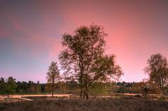 red glow (stevefge) Tags: trees red sky nature netherlands landscape nederland natuur hatertsevennen