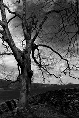 365-161 ( estatik ) Tags: road park new york trees blackandwhite bw sculpture usa white ny storm black tree art andy wall museum project 1 king state arts dramatic center monotone stormking empire land windsor british winding 365 rd 161 goldsworthy 365161 23416 42316 april232016