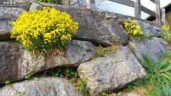 Sdtirol - South Tyrol (Italy) - Alto Adige - Italia >  An der  Etsch in Algund (warata) Tags: italien italy alps italia alpen sdtirol altoadige southtirol adige dolomiten 2016 etsch algund lagundo