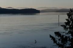 Quiet Tofino morning (bichane) Tags: morning mist canada heron water dawn bc britishcolumbia peaceful vancouverisland sound tofino tranquil clayoquot