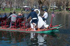 Swan Boats (Schwanenboote) in Boston Public Garden (wuestenigel) Tags: park usa boston us swan massachusetts schwan bostoncommon bostonmarathon bostonpublicgarden bostonstrong