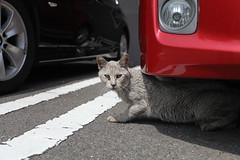 Stray cat (ogizooo) Tags: cat canon   ef1740mmf4l streetsnap  5dmark2