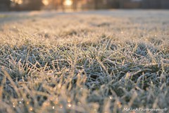 Frosty Morning (mollyannett) Tags: christmas morning flowers winter sunset summer blackandwhite sun cold flower color colour macro college ice nature wet beautiful grass sunshine sunrise project dark bench season landscape photography early frozen leaf pretty frost december pattern seasons natural bright britain magic frosty sparkle crisp freeze icicle 17 british icy bnw
