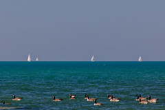 Sails and Geese Bayfield (Jack Pal) Tags: ontario birds fauna places lakehuron florafauna glitterbay photographersunite ll17 ll2017