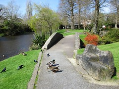 Barrett's Bench (Eire's Gorgeous Golden Gorse representative) Tags: bridge trees ireland irish water grass bench duck path cork scenic mallard hbm benchmonday riverdallau kanturkpark