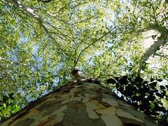 Abraza un arbol (mlinares2505) Tags: parque naturaleza jardin bosque follaje miguellinares fz200
