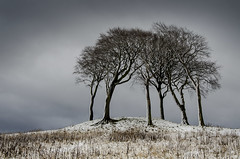 Copt Hill, Houghton-le-Spring (DM Allan) Tags: trees winter snow cold houghton sunderland copthill wearsdie