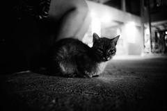(bendikjohan) Tags: blackandwhite bw cats film cat thailand blw bmw krabi wildcats railay bl railaybeach modality