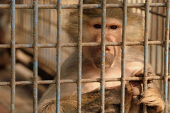 Prison Life - XII (Rafee Mizan Khan Chowdhury Niloy) Tags: people nature canon garden botanical zoo wildlife photowalk dhaka mirpur 70d