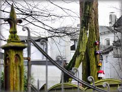 Baum Nr. 1: Hier wohnt Familie Vogel (LL) Tags: friedhof tor alter gelsenkirchen baum altes buer nistksten
