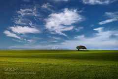 The Wind (hmbautista) Tags: sky tree nature grass clouds landscape outside outdoors solitude alone wind outdoor breeze solitary minimalist