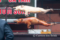 Pig pair (10b travelling) Tags: two food french asian pig asia asien southeastasia vietnamese northwest pair colonial spit meat roast vietnam pork valley asie sapa hmong hillstation laocai indochine indochina suckling 2015 làocai tenbrink muonghoa carstentenbrink iptcbasic 10btravelling