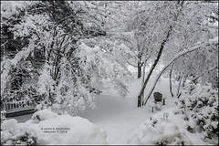 SNOW DAY, II (susies.genii) Tags: scenery outdoor ourgarden snowday adirondackchair snowcoveredtrees winterscene gardenbench february52016