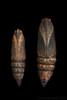 Small vs. big Elephant Hawk-moth (Franziska Bauer) Tags: lepidoptera sphingidae pupa puppe schmetterling metamorphose deilephilaporcellus nachtfalter schwärmer deilephilaelpenor kleinerweinschwärmer weinschwärmer deilephila schmetterlingspuppe
