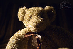 Dottys Teddy (Neyol) Tags: toy teddy spot spotlight