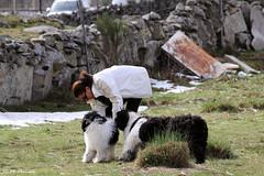 012179 - Becerril de la Sierra (M.Peinado) Tags: camping copyright españa dog dogs animal canon spain perro perros animales kdd mascota comunidaddemadrid 2016 perrodeagua becerrildelasierra canoneos60d pdaesdelassierrasdeguadarramamadridyguadalajara perrosdeaguayamigos 31012016 rinconanimalista enerode2016 kdd24012016