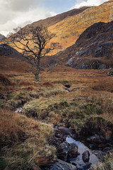 The winding stream (Damon Finlay) Tags: mountains canon landscape scotland highlands scottish loch wilderness 1785mm kinloch efs garry glengarry lochaber lochgarry hourn quoich scottishhighlands highlandsandislands efs1785mm lochquoich 60d canon60d kinlochhourn