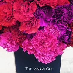 Valentine's Day (Nicholas  H) Tags: flowers red flower love sweet valentine romantic tiffany 0214