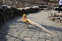 150327_1301 (Gordon C ) Tags: zoo korea seoul seoulgrandpark  seoulzoo
