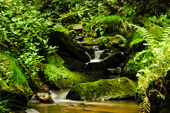 Pure Nature (mr_kuchen) Tags: plant green nature water forest moss exposure outdoor longtime d5100
