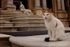 Turk Cat (Stefan Lambauer) Tags: trip cat turkey trkiye istanbul palace gato 2009 istambul turquia bosphorus mimetismo mimetism bsforo stefanlambauer haticesultan