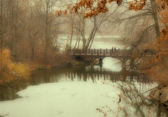 Central Park, NYC (nianci pan) Tags: park nyc newyorkcity bridge winter urban mist lake snow plant newyork tree nature water rain misty fog river landscape pond outdoor centralpark manhattan sony foggy tranquility rainy serenity serene pan tranquil   sonyalphadslr  nianci sonyphotographing