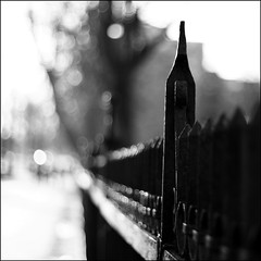 Street Bokeh (kkirby864) Tags: street bw fence novascotia bokeh halifax publicgardens springgardenroad