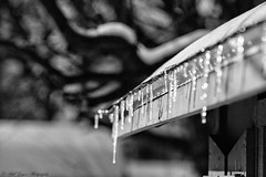 _MG_5523 copy (Bill Gagne Photography) Tags: winter blackandwhite snow cold color ice colors monochrome leaves canon bokeh pastel february icicles shimmer 135mm thelook 135l canonef135mmf2lusm vsco billsphotos hartfordcountyconnecticut canoneos5dmkll vscopresets billgagnephotography